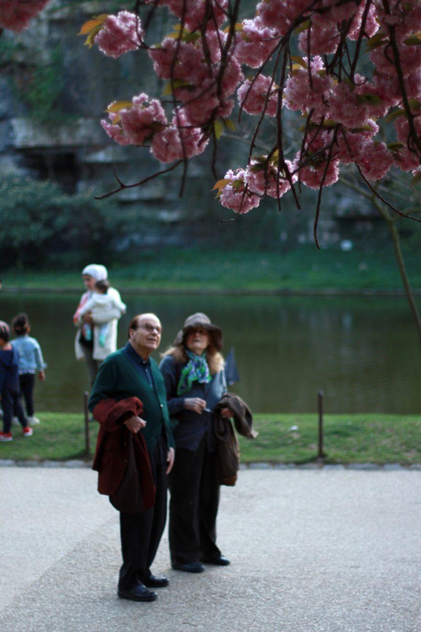 couple de personnes âgées contemplant un cerisier du Japon au Parc des Buttes Chaumont en avril 2017, à Paris, photo en couleurs